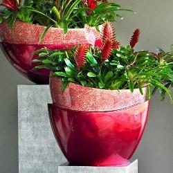 Florists in Douglas Cork - Ireland